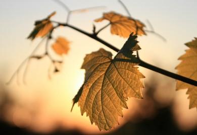 engrais et amendement pour sol vigne